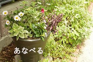 寄せ植え、植栽の見本撮影をフォトスタイリングボードを使うとより効果的に撮影できます。